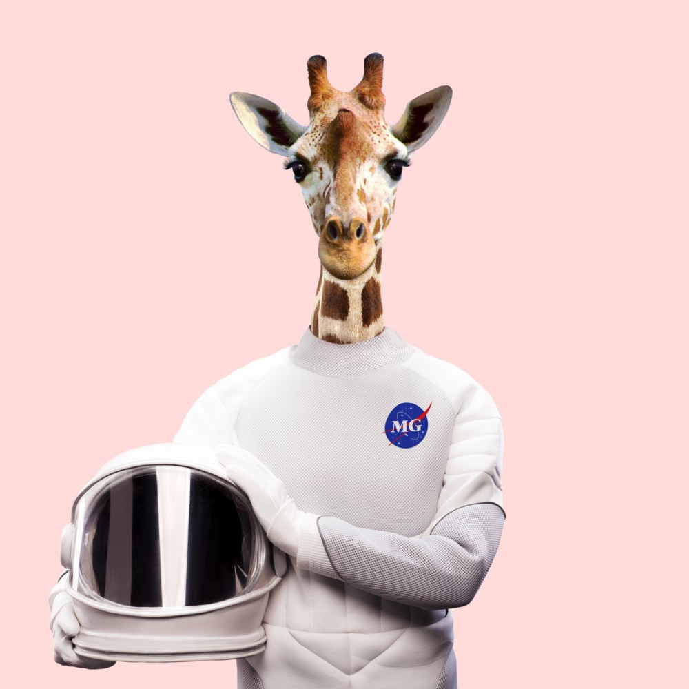 Album Art | More Giraffes